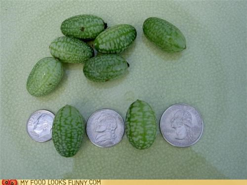 cucumber,itty bitty,miniature,tiny,watermelon