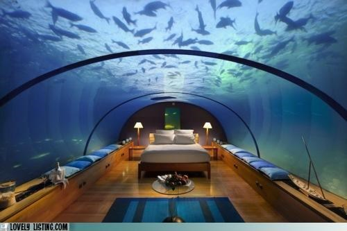 aquarium,bedroom,fish,hotel,rental,restaurant,tank