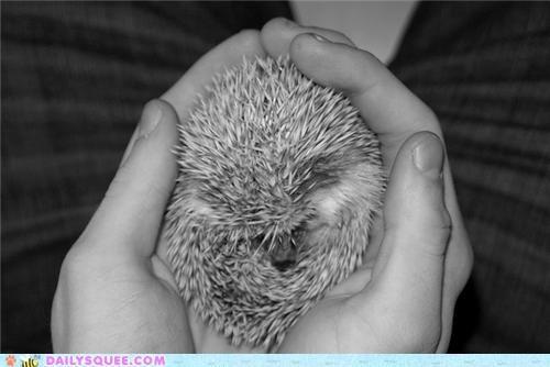 baby end goodbye hedgehog hegemon pun squee spree - 4970966272