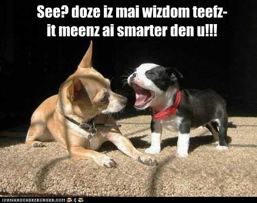boston terrier chihuaha friends sunbeam teeth wisdom teeth - 4971079680