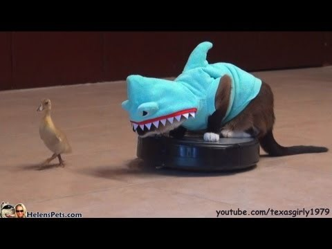 Ignore My Grumbling Stomach - Animal Comedy - Animal Comedy