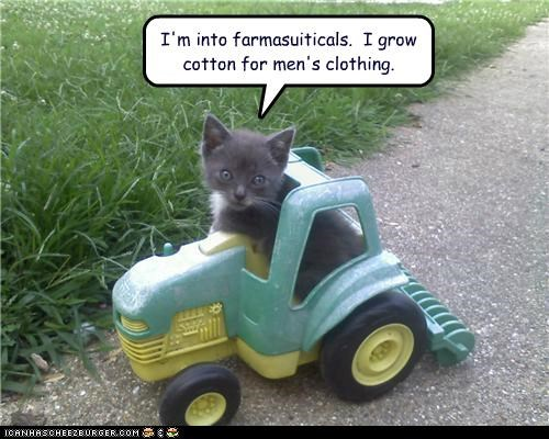caption captioned cat clothing cotton grow into kitten pharmaceuticals pun tractor - 4971194624