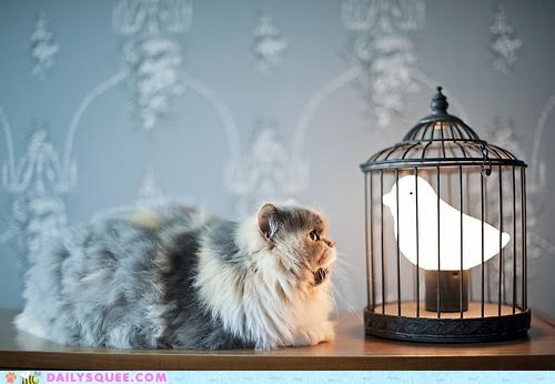 acting like animals,annoyed,bird,cat,confused,joke,lamp,paper