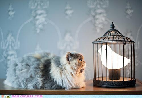 acting like animals annoyed bird cat confused joke lamp paper - 4971199232