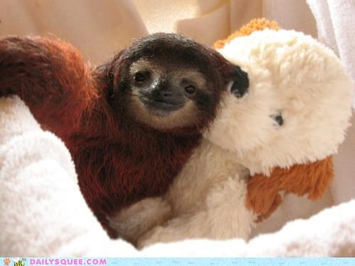 baby,best,cuddling,Fluffy,forever,friends,Hall of Fame,Rhetorical Question,sloth,smile,stuffed animal