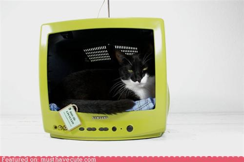 bed,cat,crate,hollow,house,monitor,TV