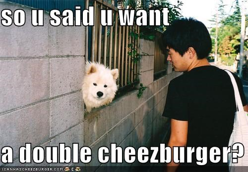 Cheezburger Image 4971728896