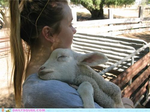 adorable,baby,lamb,name,orphan,pun,reader squees,runt,sheep,squee