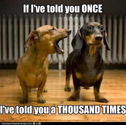 dachshund,dachshunds,talking,you never listen