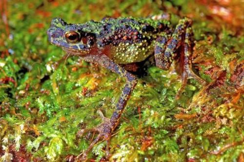 Borneo,Hooray For Science,lost and found,Rainbow Toad