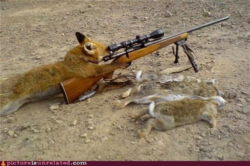 fox,hunting,rabbit,rifle,wtf