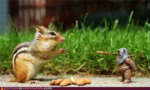 animals chipmunk ewok start wars wtf yub nub