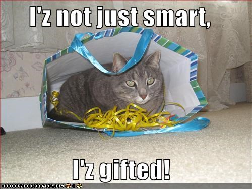 bags,gifts,grey,lolcats