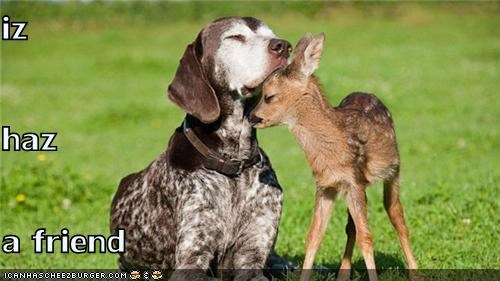 best friends deer friends german shorthaired pointer hugs love loves outdoors - 4973010688
