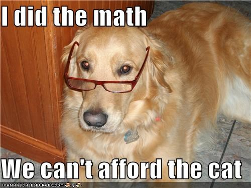 glasses golden retriever math smart - 4973031424