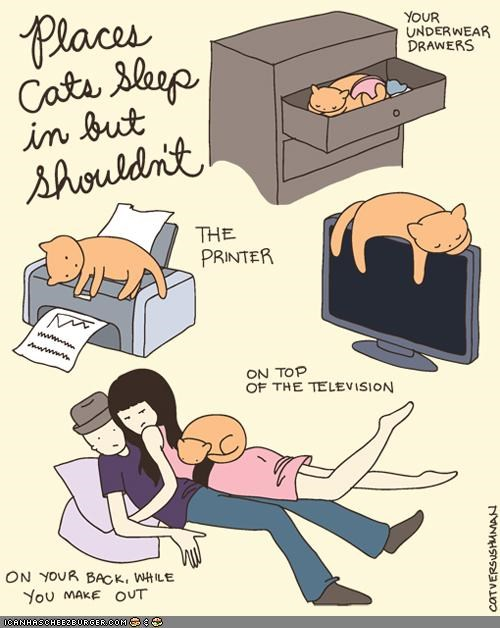 comfort is relative,comic,comics,get out of there cat,silly,sleep,sleeping