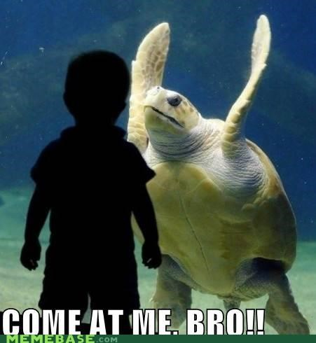 bro come at me i like turtles Memes