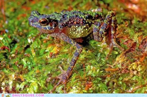 amazing discovery first time photograph Rainbow Toad rare rediscovery toad - 4973872896