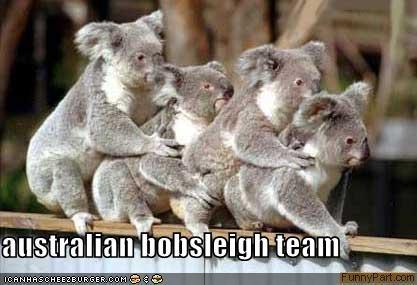 australia bobsleds koalas sleighs
