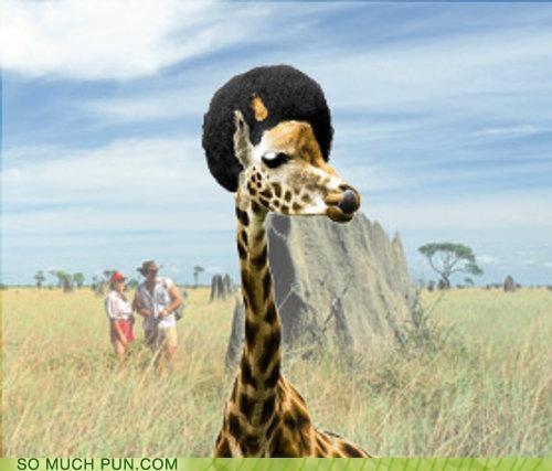 afro,giraffes,juxtaposition,literalism,neologism,portmanteau