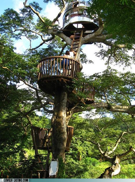 jungle tree tree house - 4974022144