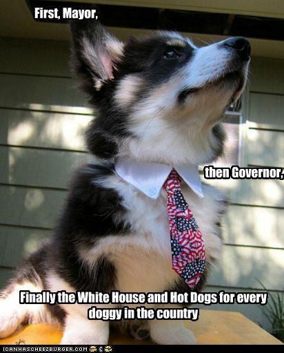 american flag tie clothing corgi political political pup politics - 4974220544
