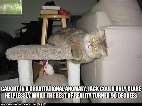 90 degrees anomaly caption captioned cat caught glaring gravitational Gravity helpless physics rotating stuck