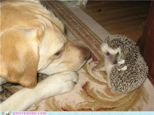 best,best friends,dogs,friends,friendship,hedgehog,Interspecies Love,playing,reader squees