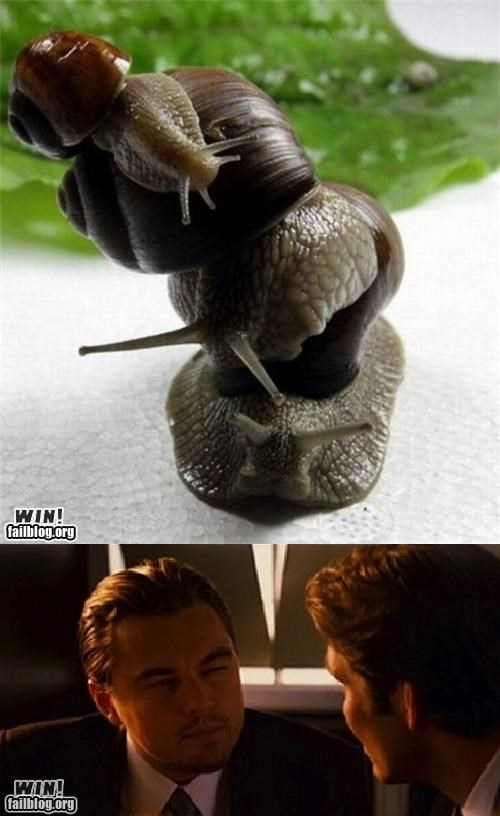 Inception,mother nature ftw,movies,snail