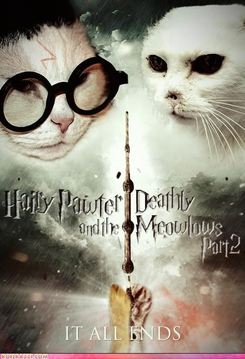 Cats funny Harry Potter Movie movie poster sci fi - 4974730240