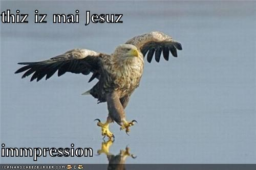Cheezburger Image 4974812672