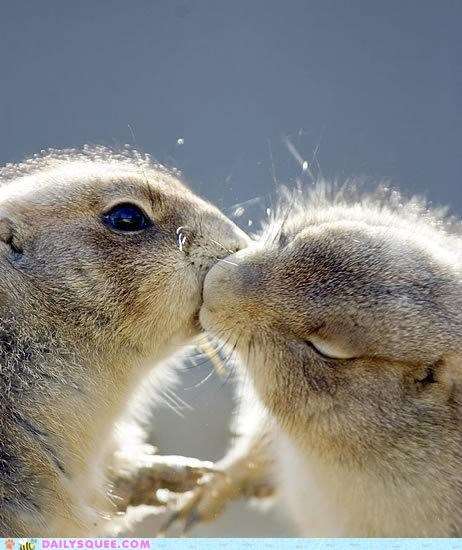 cute cuter enhanced Hall of Fame KISS kisses kissing what-is-this-animal - 4974927616
