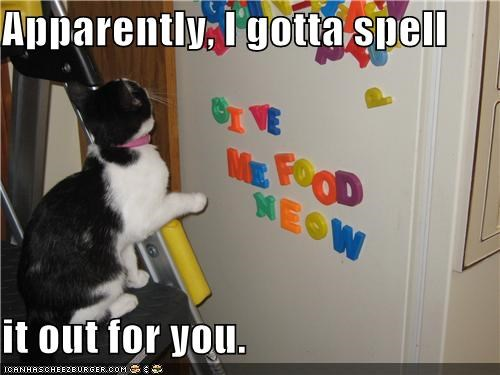 caption captioned cat demand do want fridge magnets need noms refrigerator spell - 4975932672
