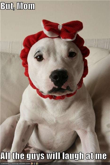 beautiful,costume,couch,Flower,pit bull,silly