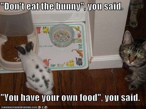 bunny caption captioned cat dont eat food human liar thief - 4976155904