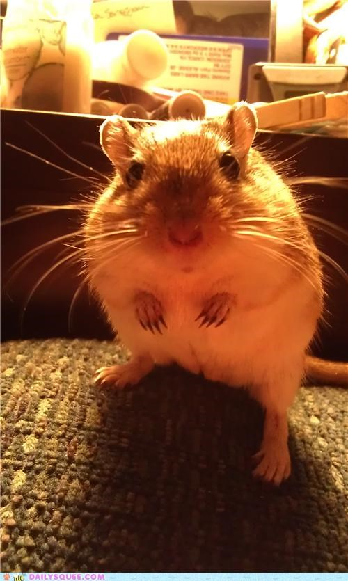 baby beautiful classic gerbil neologism pose posing reader squees stance - 4976186880