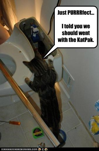 Just PURRRfect... I told you we should went with the KatPak.