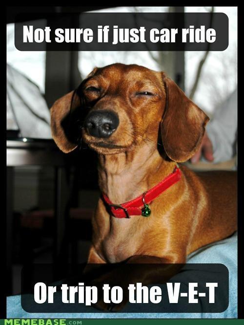 animemes car ride dogs fry pets spelling vet v-e-t - 4976868352