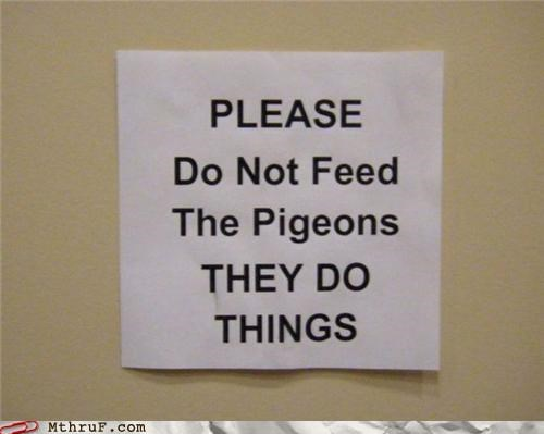 do not feed,pigeons,signs,things