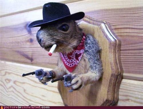 animals cowboy guns squirrel taxidermy wtf - 4977421056