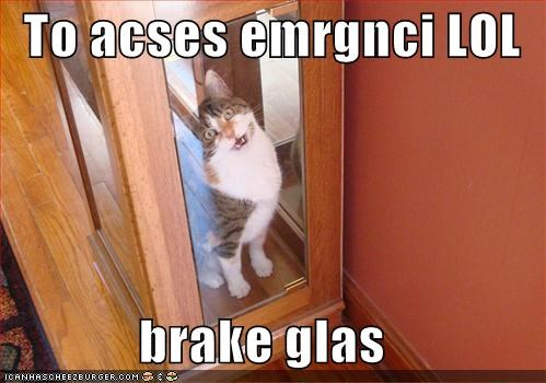 case,emergency,glass,lolcats,meowing