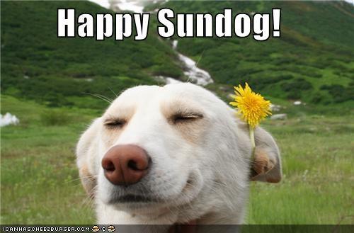 dandelion flowers flowers in your hair golden retreiver green field happy sundog outdoors smiling - 4977750528