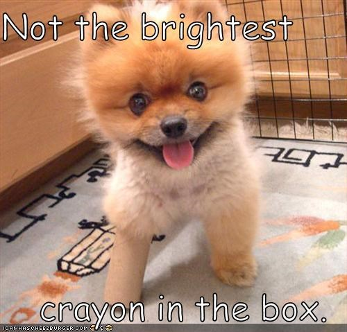 not the brightest crayon in the box cheezburger funny memes