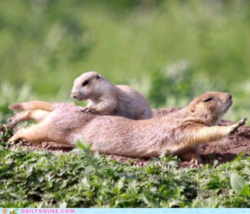 acting like animals back chiropractor knots physical therapy prairie dog Prairie Dogs stress