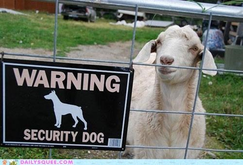 acting like animals beware confused dogs epiphany goat mistake realization security sign talking smack warning - 4978249472