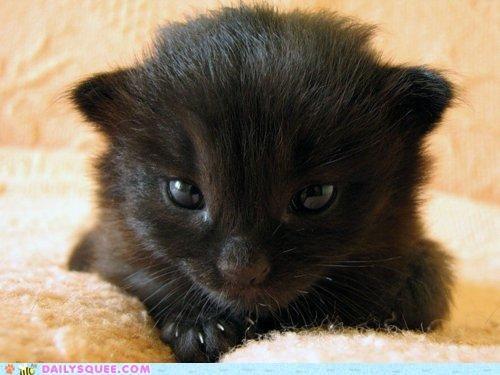 baby cat comparison hypnosis hypnotizing kitten - 4978577408