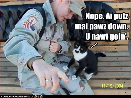 caption captioned cat Cats dont-go dont-leave Hall of Fame lolcats military no paws political pictures soldiers stay - 4978803712