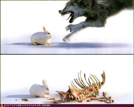 bones bunny monty python scary wolf wtf - 4979424512