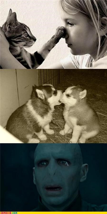 cat cute dogs Harry Potter nose voldemort - 4981039104