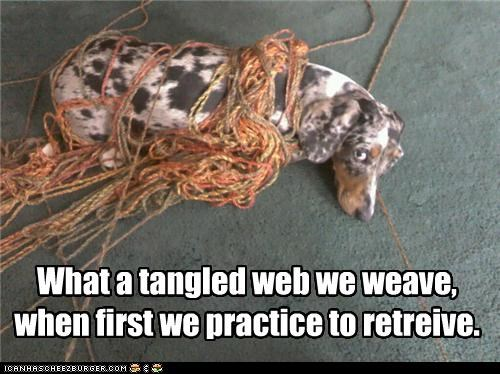 german shorhaired pointer in trouble knitting mess mixed breed physics science tangled tangled web yarn